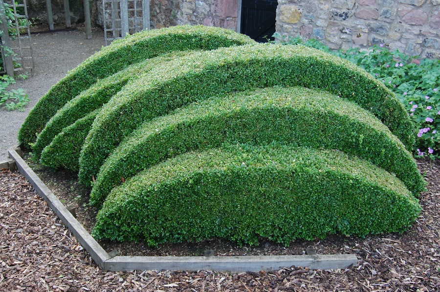 Such a fan of unusual topiary garden design pinterest for Kingsbury garden designs
