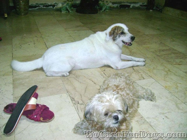 Yakult dog