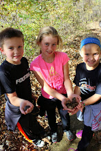 Hickories and Acorns