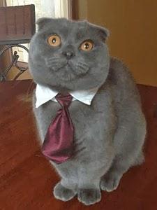 Imagenes Graciosas de Animales, Gato Fiestero