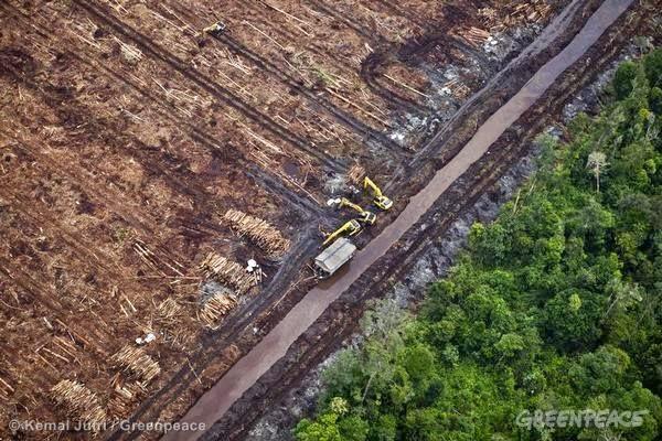 WWF Siap Membantu Inisiatif Restori APP