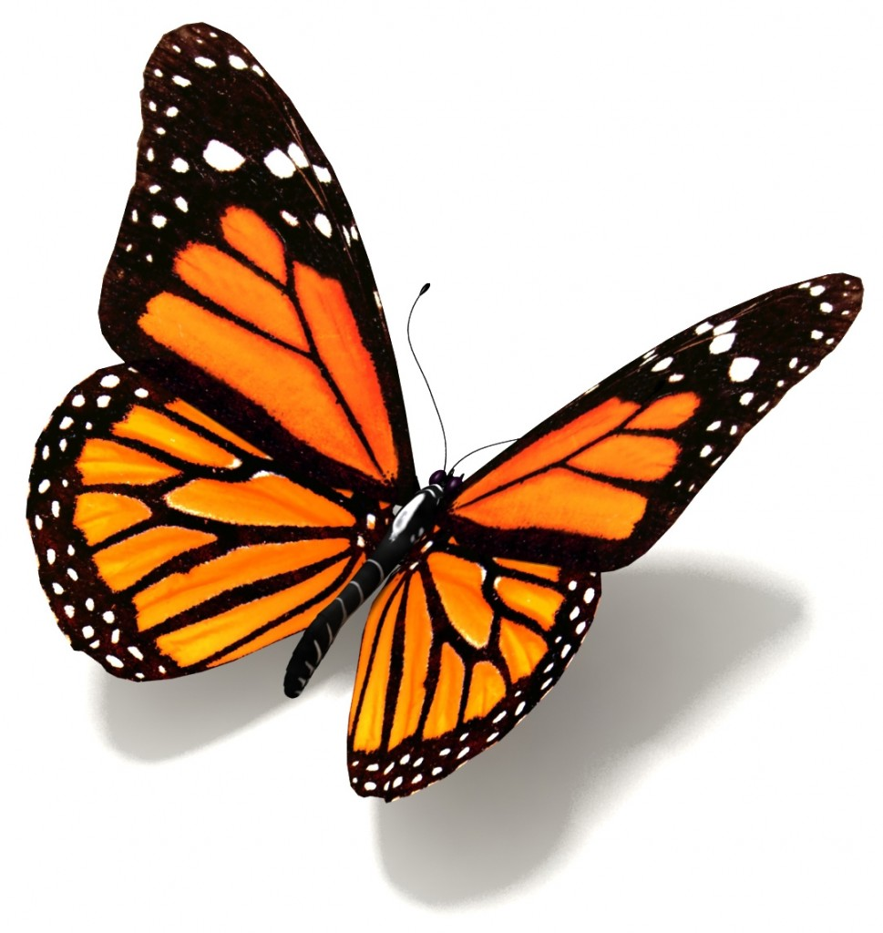 gambar gambar kupu kupu lengkap