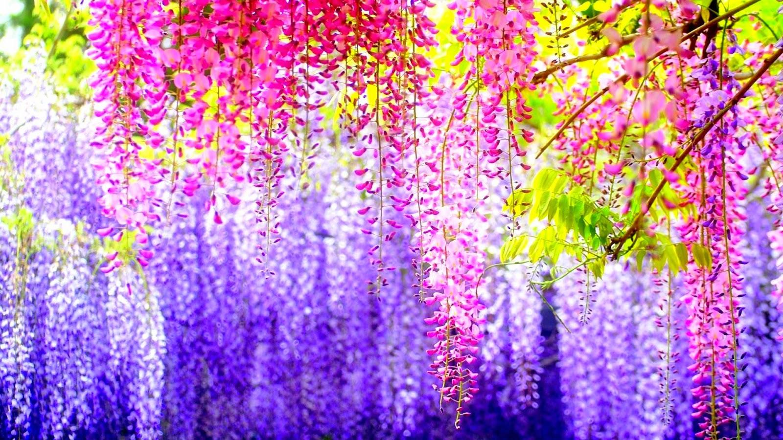 Phong Cảnh Mùa Xuân