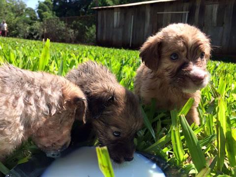 Perritos rescatados en la selva 8