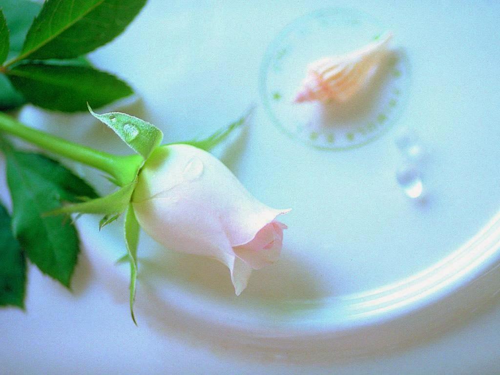 White Rose Love Wallpaper http://refreshrose.blogspot.com/