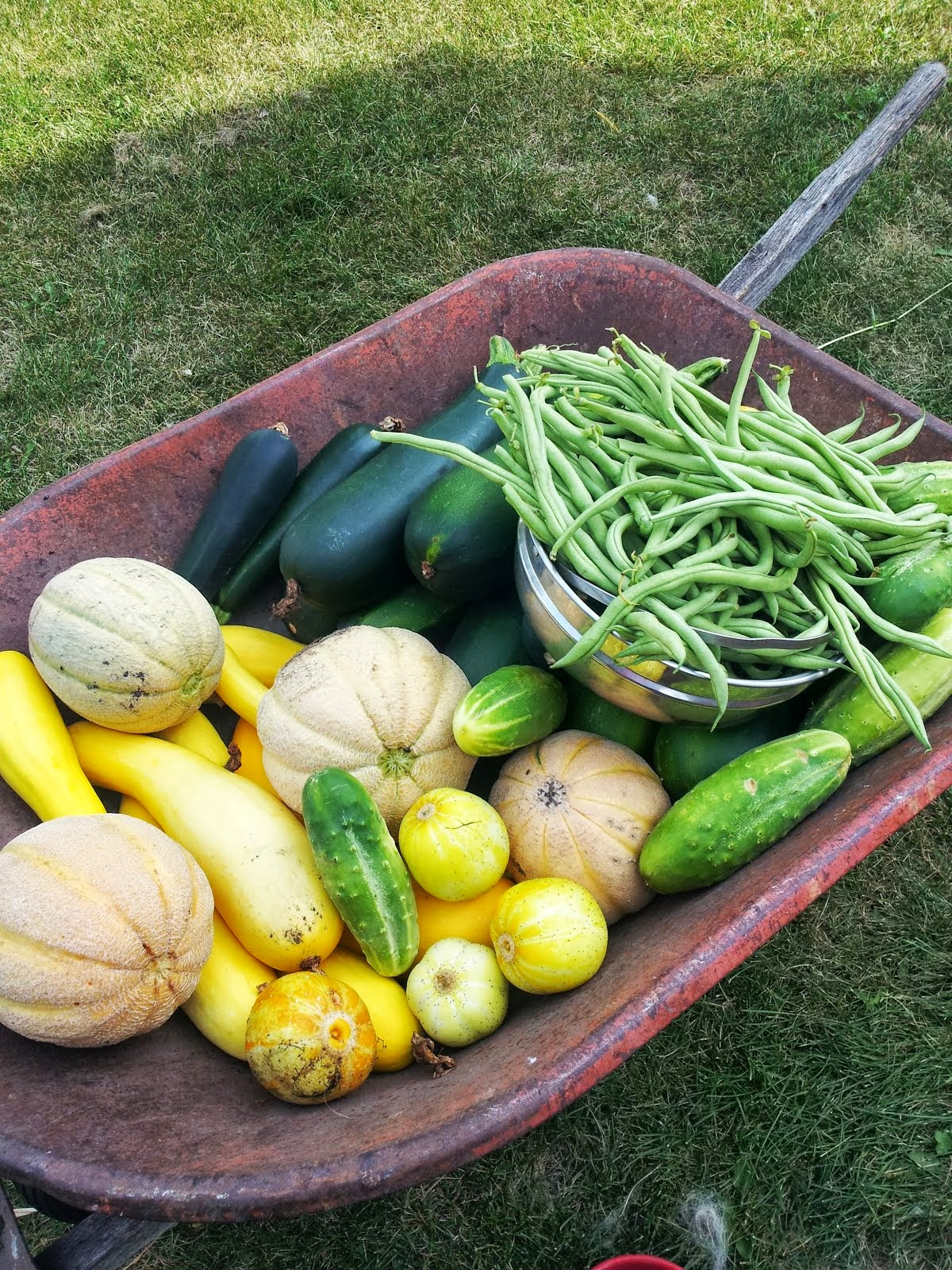 beans melons and summer squashes