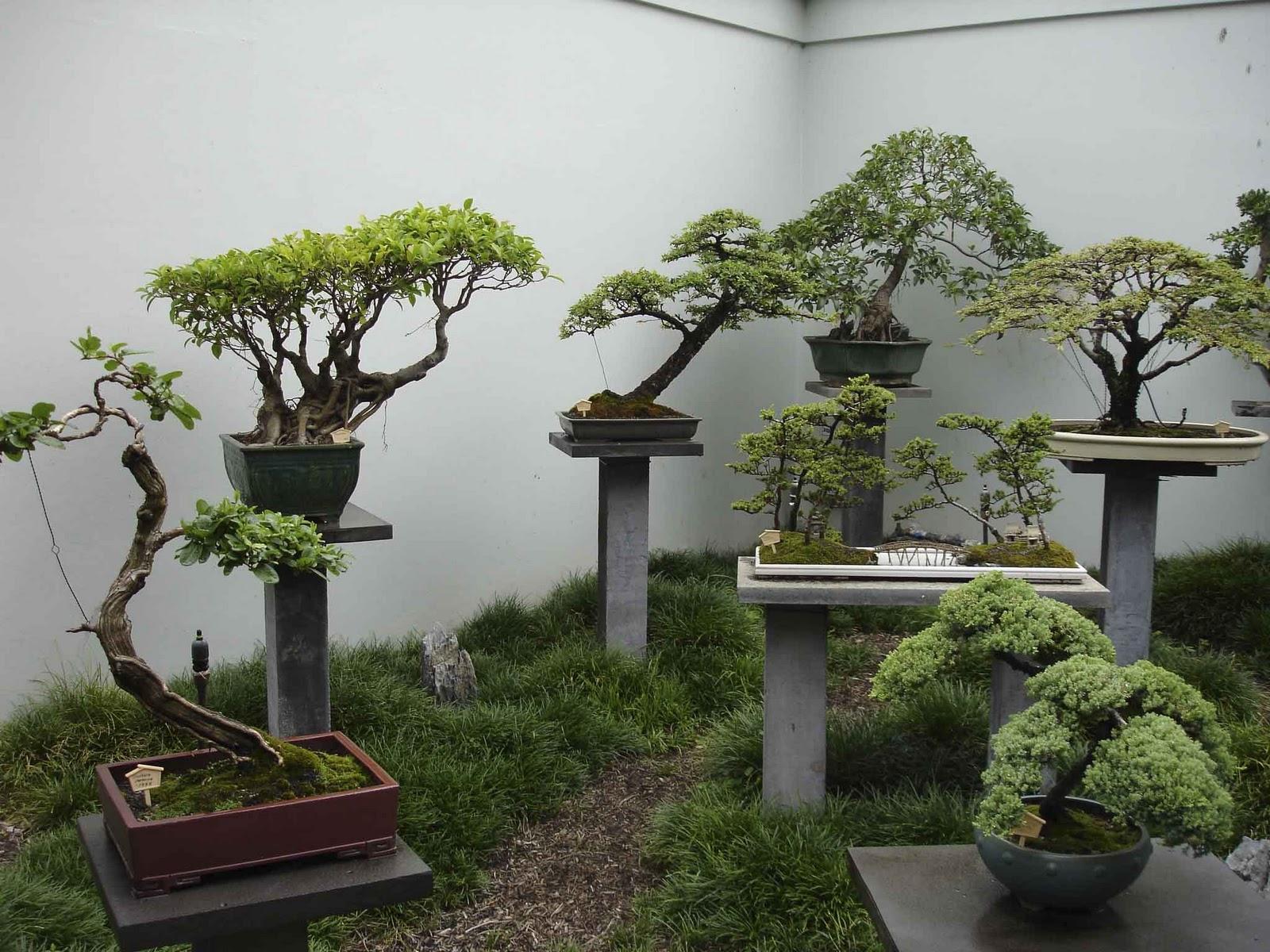 Como mejorar nuestras vidas y la de las pr ximas generaciones - Como cultivar bonsais ...