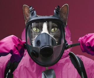 cat with hazmat suit