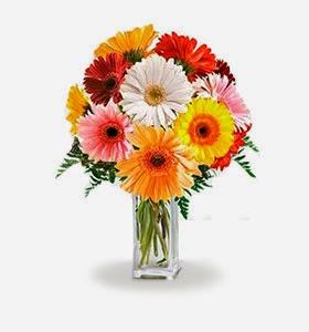 rainbow-gerbera-bouquets