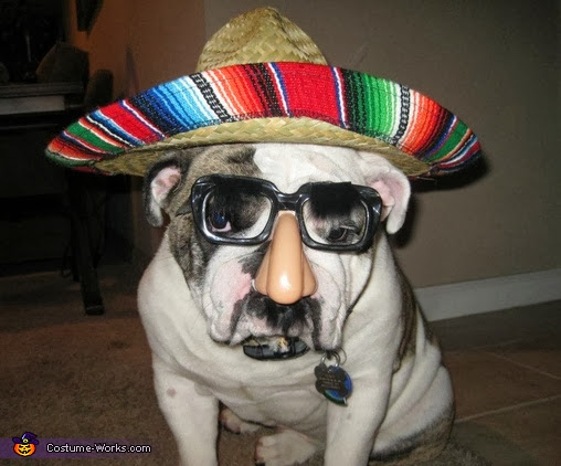 best dog halloween costumes, dog wearing sombrero