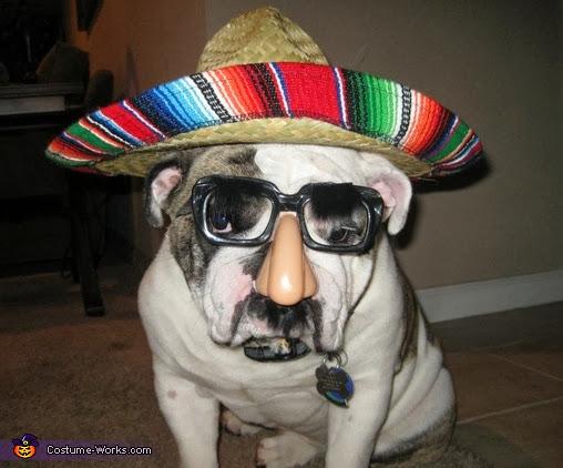 best dog halloween costumes, dog wearing sombrero