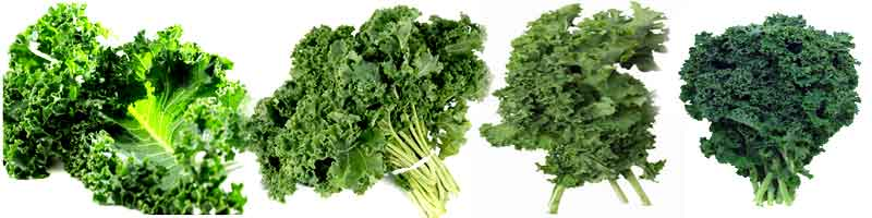 Effects of kale