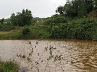 Bassa de Codinacs