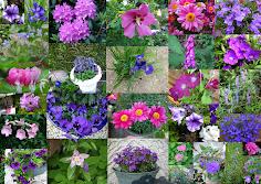 Lila Blütenträume