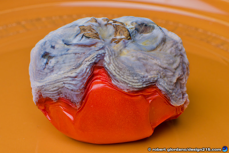 photo of a rotten tomato, Copyright 2011 Robert Giordano