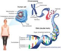 DNA Life Span