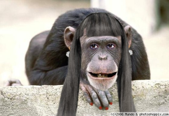 all funny cute cool and amazing animals funny chimpanzee pictures