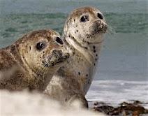 Vil du med ud og se på sæler?