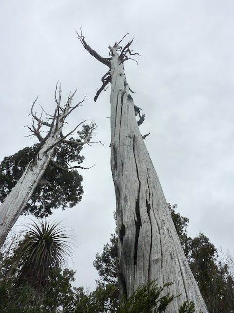 bare tree next to overland track