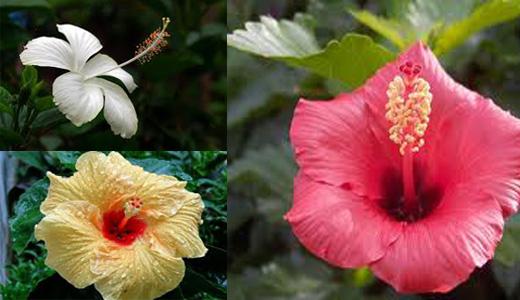 Kumpulan Soal Apakah Bedanya Bunga Lengkap Dan Bunga Tidak Lengkap
