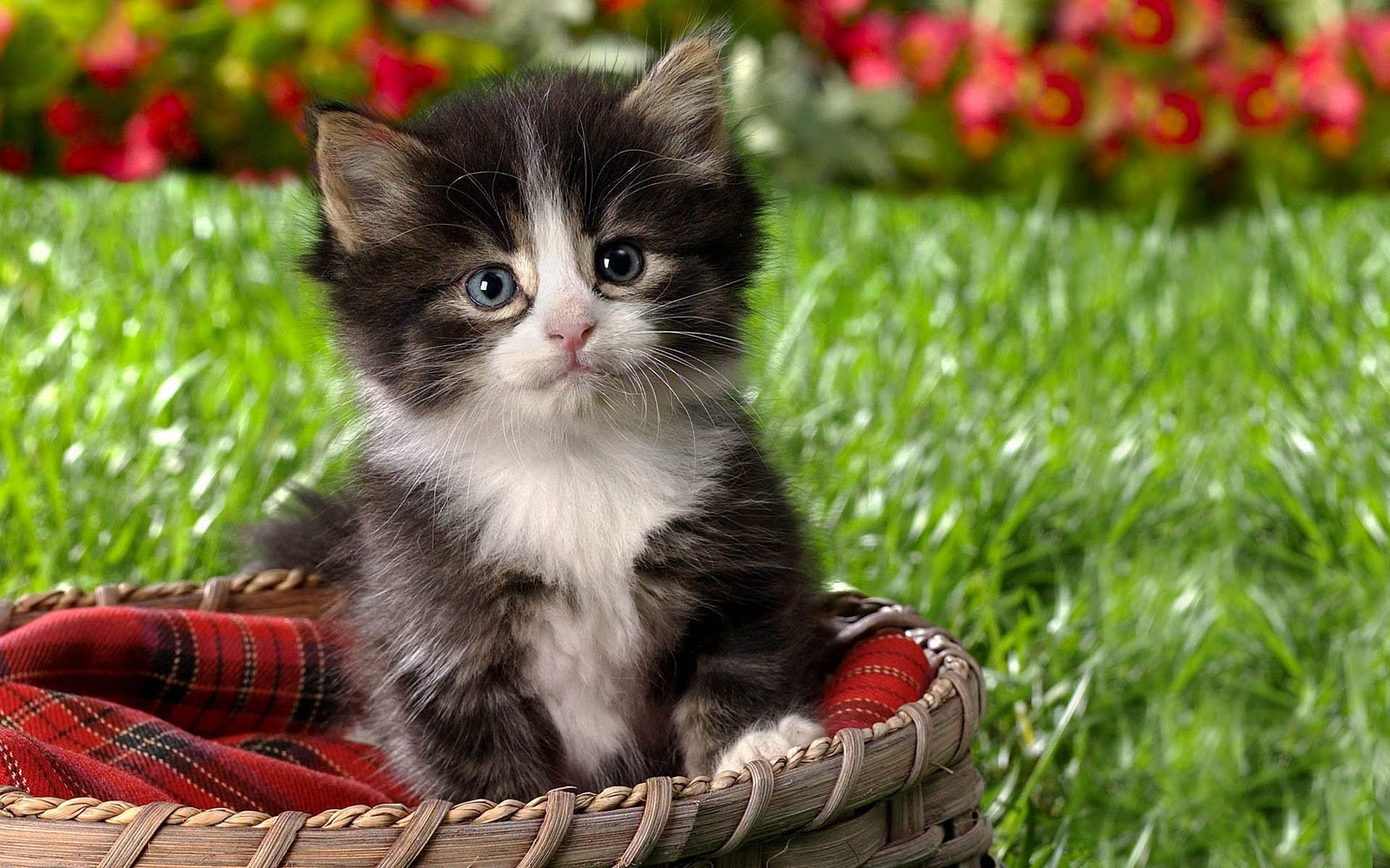 wallpaper gallery cat kittens wallpaper