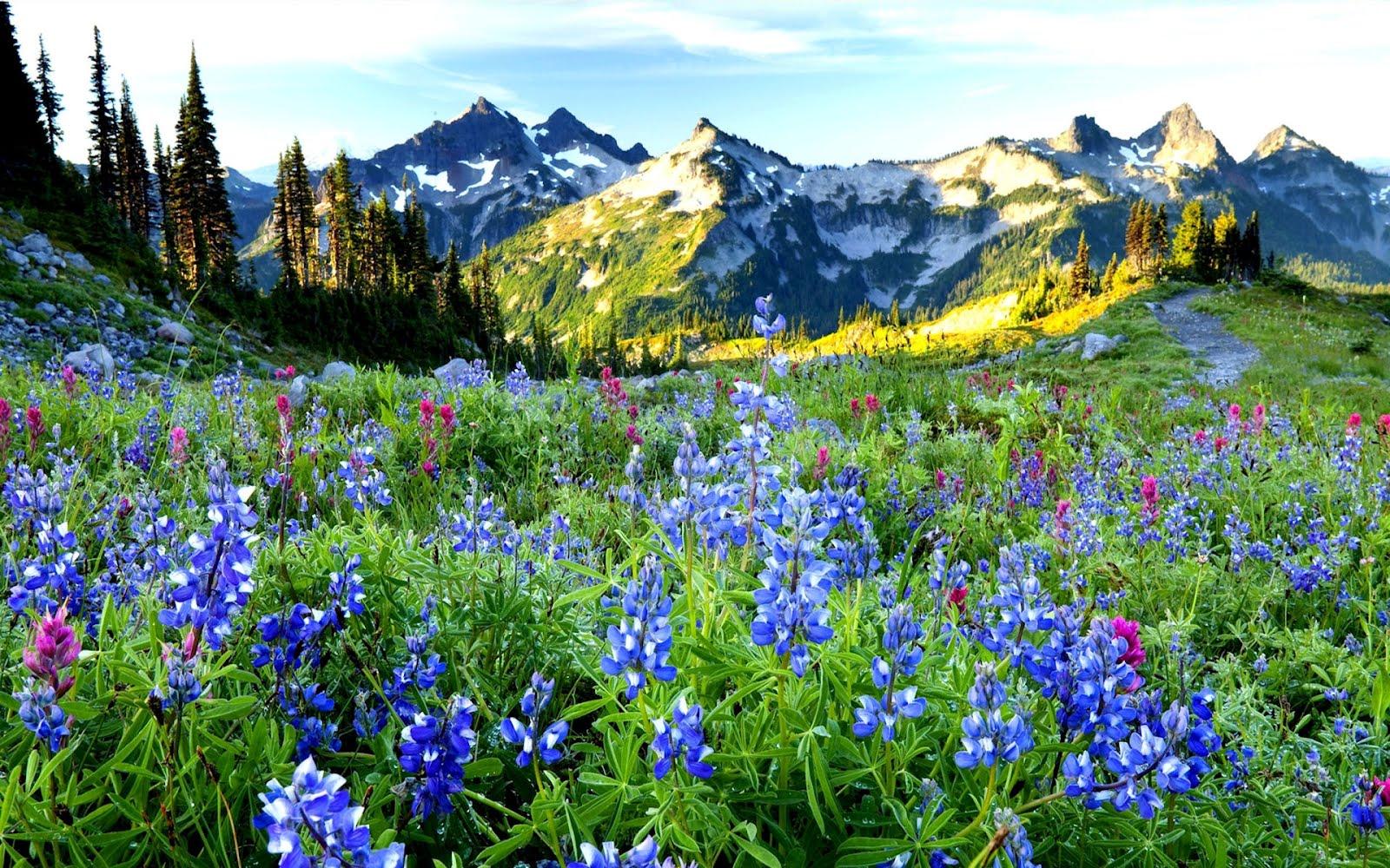 http://4.bp.blogspot.com/-g3NJDVbm1CY/Txb-5wLY3AI/AAAAAAAAuiM/bGqso8iH2f8/s1600/amanecer-en-el-paraiso-paradise-nature-landscape.jpg