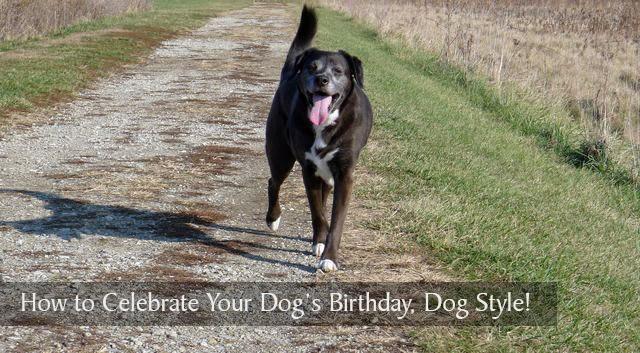 Tips for dog birthdays