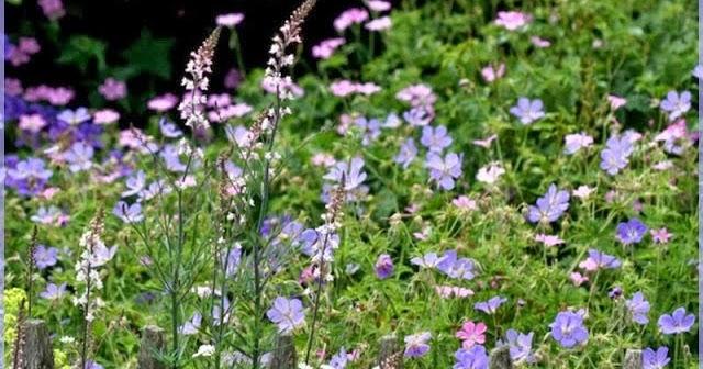 Derri re les murs de mon jardin seeds of love les gagnants for Derriere les murs de mon jardin
