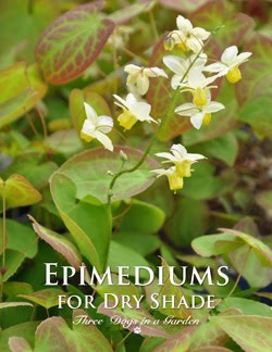 Epimediums for Dry Shade
