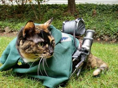 Ereneko: Kucing Cosplayer Lucu dari Jepang