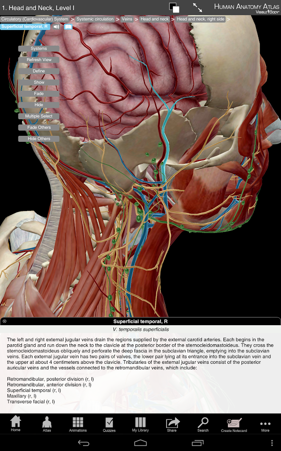 Atlas Of Human Anatomy 4th Edition Pdf Download Meant Drawings
