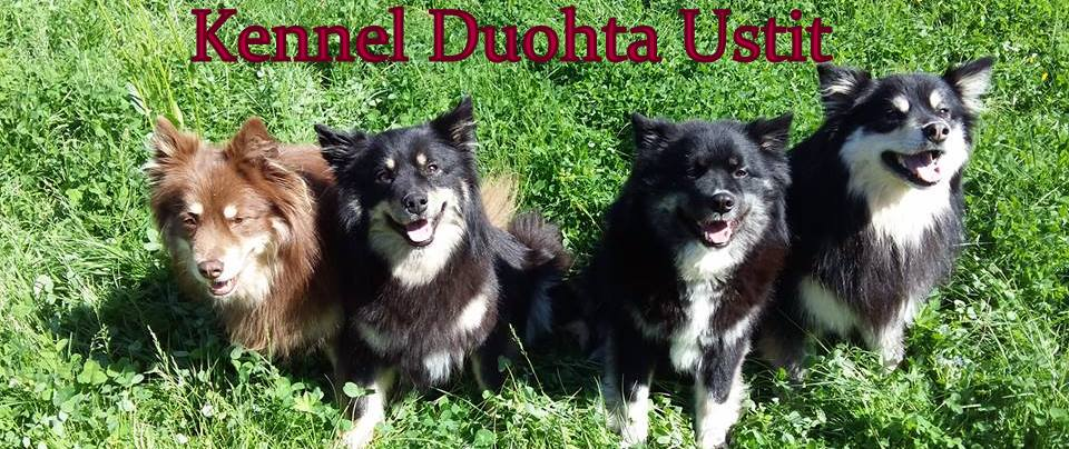 Kennel Duohta Ustit