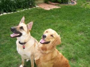 τιμές εκπαίδευσης σκύλων 2