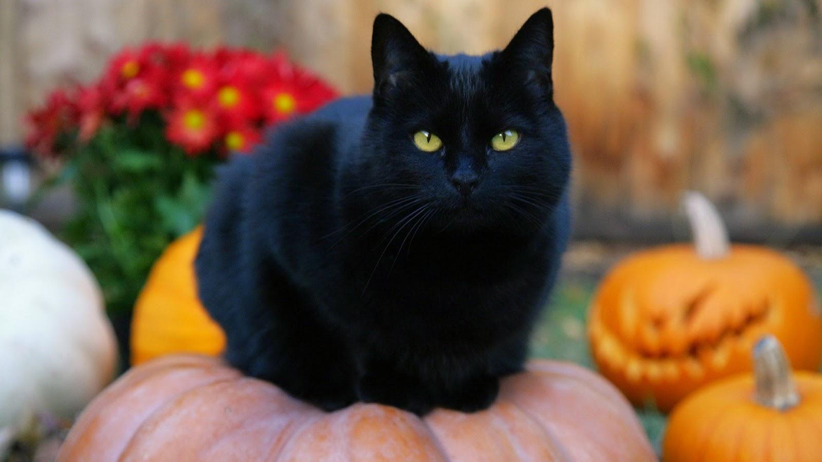 Gatto Nero Day Per Ricordare Le Migliaia Di Gatti Che Ancora