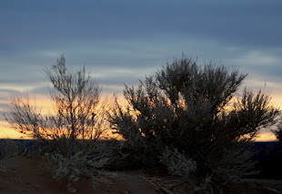 Sunset viewed through the sagebrush on the hilltop.