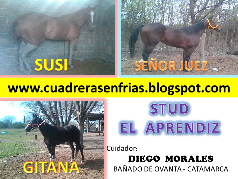 STUD EL APRENDIZ