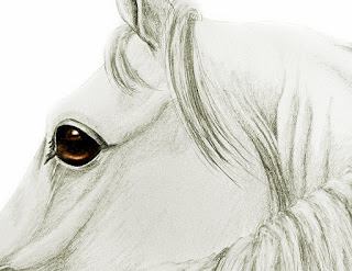 horse drawing, equine artworks, equestrian gifts