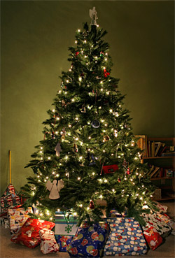Places To Buy Christmas Trees