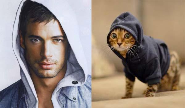 Hombres y gatitos