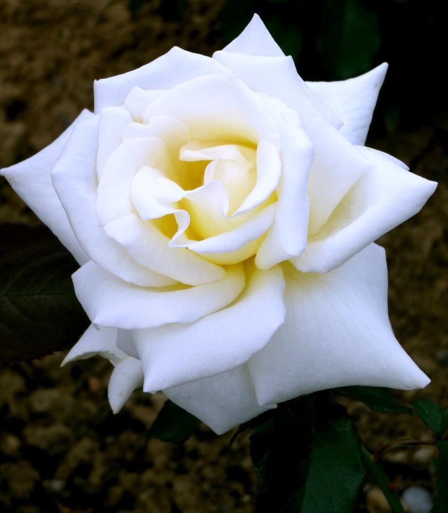 Les Photos De Floralie Elle Occupe Le Premier Rang De