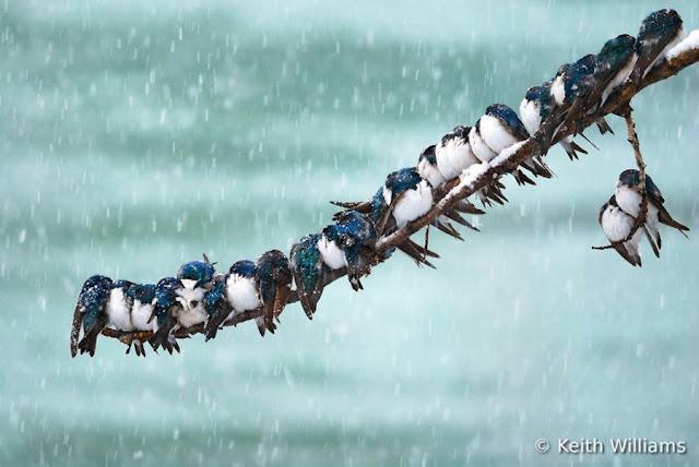 صور الفائزة بمسابقة تصوير الطيور
