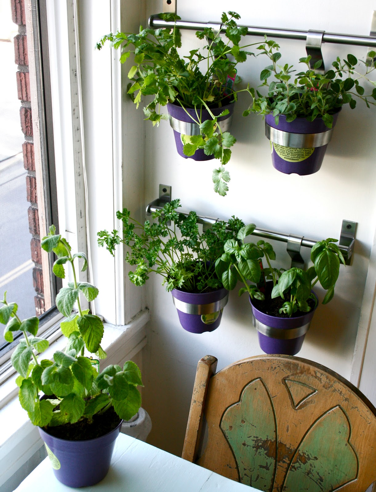The good life diy herb wall in the kitchen Indoor living wall herb garden