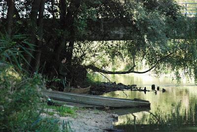 Wikingowe warkocze w lubuskich lasach