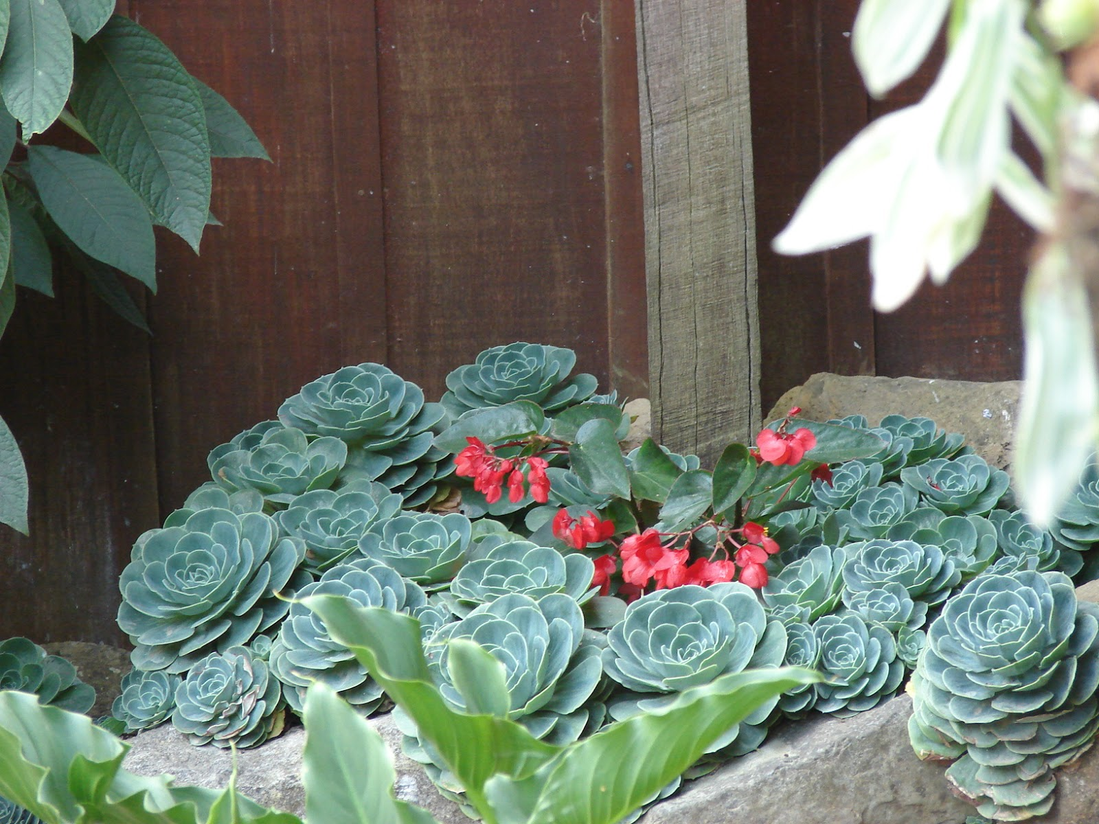Yo soy la respuesta marzo 2013 for Plantas ornamentales