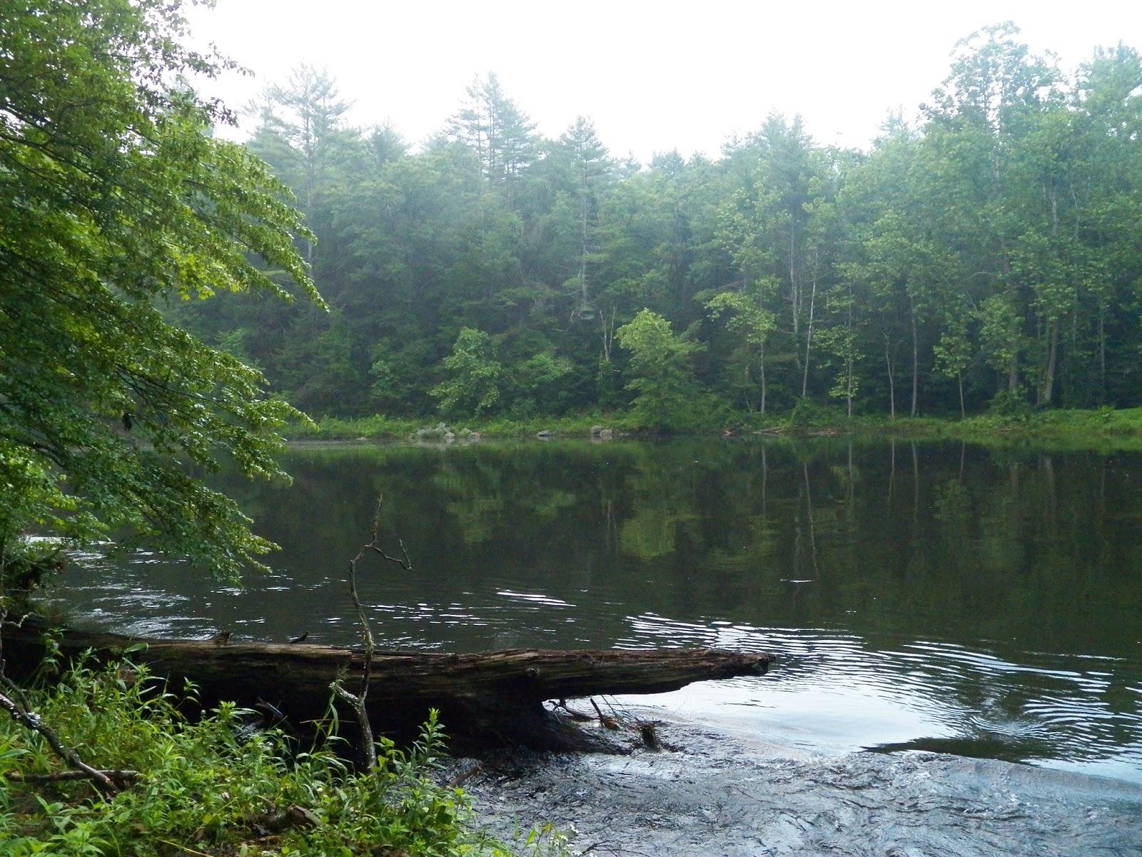 Connecticut fly angler west branch farmington river for Farmington river fishing