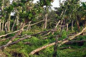 climate impact on forest