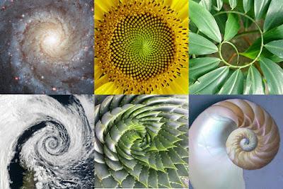 Spirala w przyrodzie - galaktyka, kwiat, liście, chmury (front niskiego ciśnienia), roślina, muszla - symbolika, znaczenie
