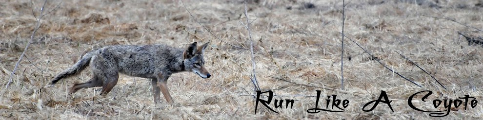 Run Like A Coyote