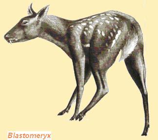 moschidae prehistoricos Blastomeryx