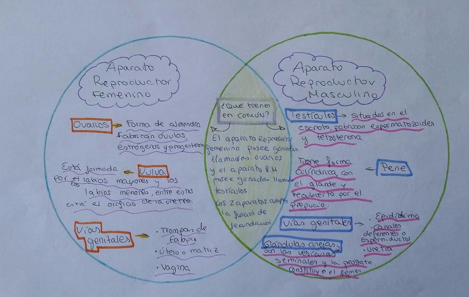 STELLA MARIS INNOVA: Diagramas de Venn.Biología-Geología 3º ESO